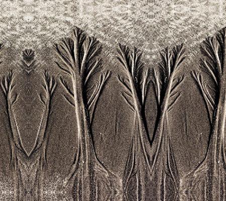 sand-trees-web